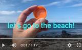 beach find-crab